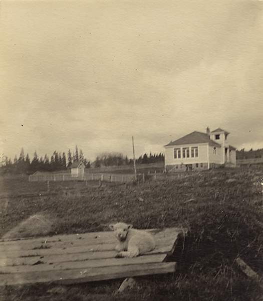 Lamb Resting on Bridge Across a Small Creek, Fairvale School in Background.