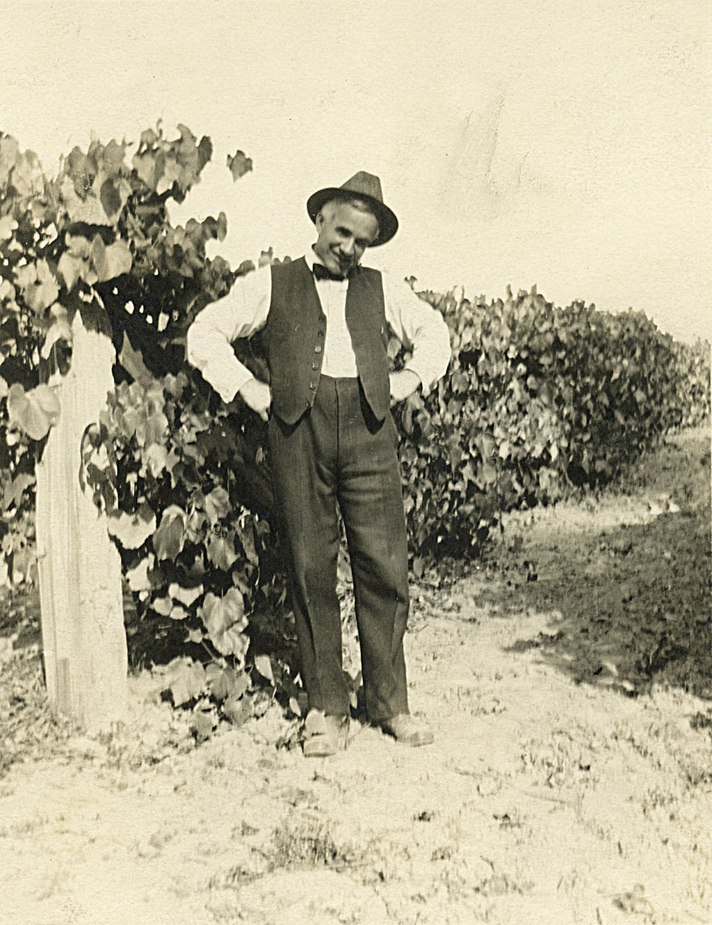 "Solomon ""Grant"" Robinson (aka ""Dad"" Robinson) in Weber's Vineyard, Multnomah, ca. 1913."