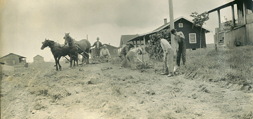 Maplewood Booster Club Planting Norway Maple Trees in Kuza, late summer, 1912.